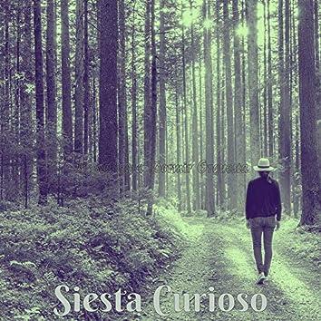 Siesta Curioso