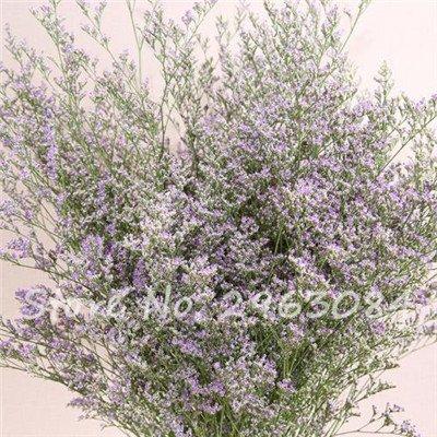 Multi Color Valentine Herbe de semences jardin vivaces fleurs Bonsai semences de plantes fleurissantes intérieur Plantes exotiques pots de fleurs 6 50pcs