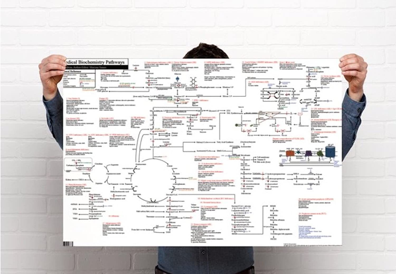 Medical Biochemistry Pathways Poster (36 x 24 inches, Gloss Finish)