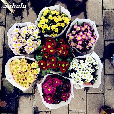 Grosses soldes! 50 Pcs Daisy Graines de fleurs crème glacée parfum de fleurs en pot Chrysanthemum jardin Décoration Bonsai Graines de fleurs 20