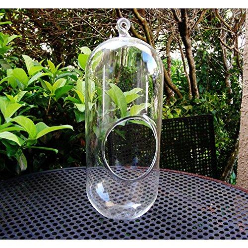Hängende Pflanze Terrarium Glas 11 Zoll Große Bullet Terrarium DIY Sukkulenten Gartenarbeit