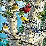 clockfc Painting by Numbers DIY Painting Set para Principiantes: pájaros y árboles Dibujo con Pinceles Decoración navideña Decoración Regalos 40x50cm (con Marco)