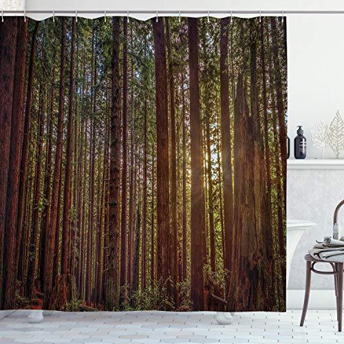 ABAKUHAUS Wald Duschvorhang, Redwood Forest Park USA, Bakterie Schimmel Resistent inkl. 12 Haken Waschbar Stielvoller Digitaldruck, 175 x 220 cm, Redwood grün-Gelb