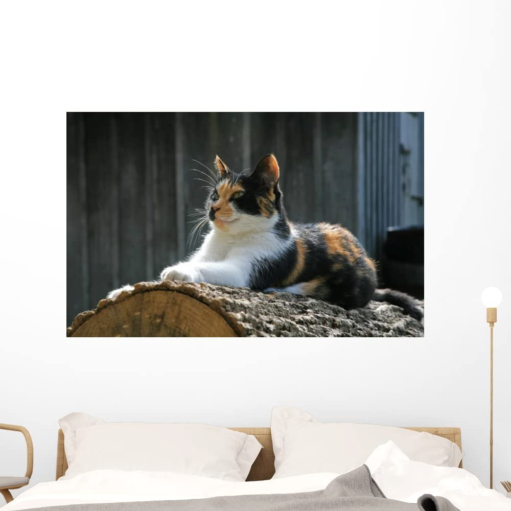 Calico Cat Decal Sticker for Animal Theme Wall Mural