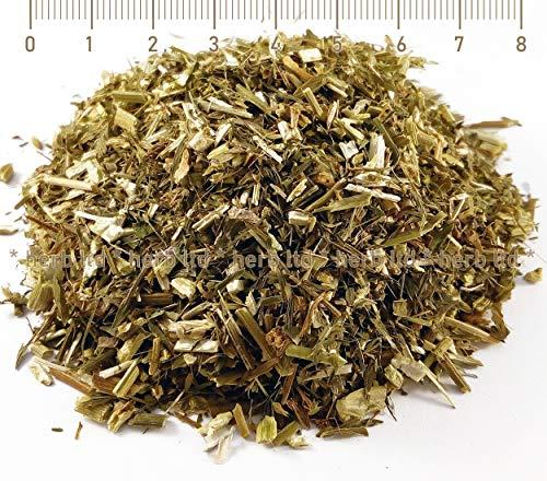 Geißraute Kraut, Geißrautenkraut Tee, Galega Officinalis (Leguminosae, Fabaceae), Kräuter Stängel