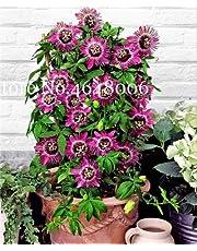 Bloom Green Co. 120 piezas de fruta de la pasión Bonsai (Passiflora Incarnata), bricolaje planta en maceta, planta de flor de vid tropical colorido para el hogar y amp; Jardín: h