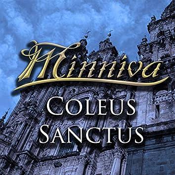 Coleus Sanctus