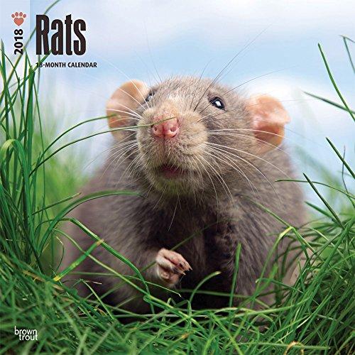 Rats - Ratten 2018 - 18-Monatskalender: Original BrownTrout-Kalender [Mehrsprachig] [Kalender] (Wall