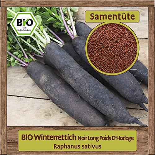 BIO Rettich Samen Sorte langer schwarzer Winter-Rettich (Raphanus sativus) Gemüsesamen