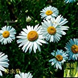 1:除虫菊の種子虫除け草白い花菊の種子着色約20種1