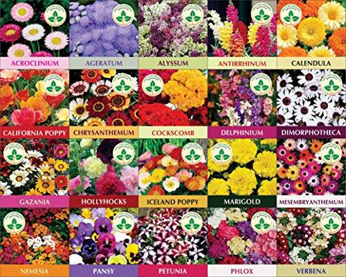 Twenty Winter Flower Seeds(4800+ Seeds). GET FREE COCOPEAT BLOCK AND INSTRUCTION MANUAL
