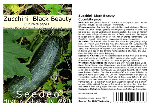 Seedeo Zucchini Black Beauty (Cucurbita pepe) 15 Samen BIO
