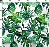 Monstera, Palme, Dschungel, Baby, Botanisch, Tropisch,