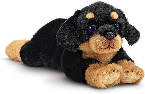 Beabagueton Bears Gunner- rougetweiler Dog