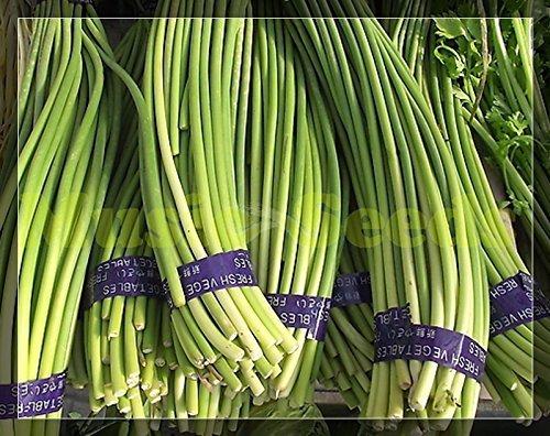 1bag = 100pcs HOT JAPONAIS graines germées de AIL géant vert délicieux LEGUMES graines NO-OGM bonsaï maison et le jardin