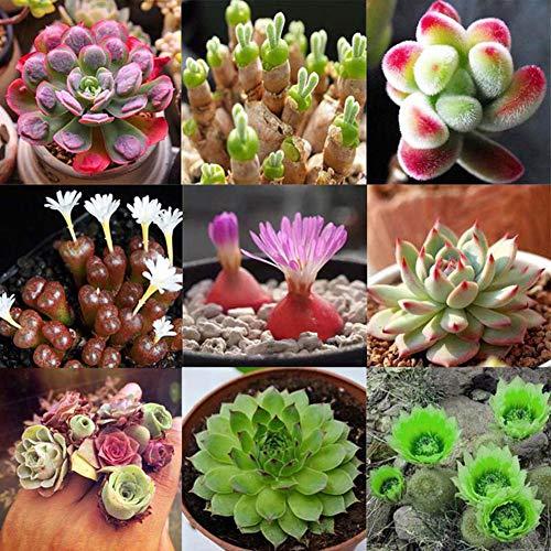 100 Pezzi Di Cactus Misti Semi Bonsai Giardino Di Casa Decorazione Balcone Semi di piante grasse