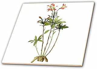 3dRose ct_106798_2 Redoute Vintage Watercolor Floral Lily of The Incas Alstroemeria Ligtu-Ceramic Tile, 6-Inch
