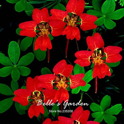 Variétés mixtes capucine Graines Capucine Tropaeolum Majus Graines de fleurs Bonsai Plante en pot bricolage jardin 15