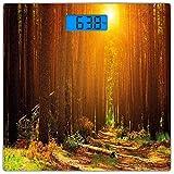 Escala digital de peso corporal de precisión Square Paisaje Báscula de baño de vidrio templado ultra delgado Mediciones de peso precisas,Sunset Dawn Sun Rise Beams en Forest Tree Nature Plantas Imprim