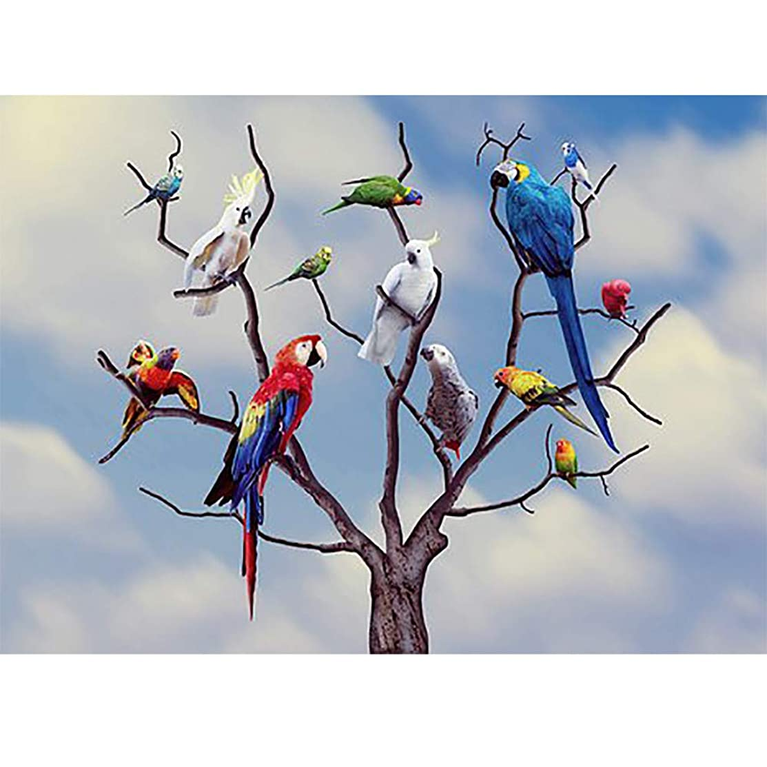 DIY 5D Diamond Painting Kit, Seaintheson Colorful Birds Full Drill Rhinestone Arts Craft Canvas Embroidery Cross Stitch Home Wall Decor for Kids Adult Beginner 30X40CM