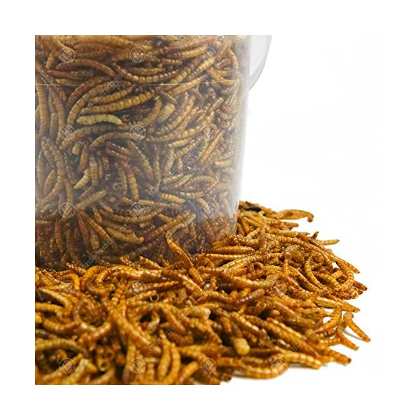 GardenersDream Dried Mealworms Mix Wild Bird Food Large Variety