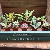 多肉植物 1号ポット 12個セット