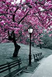 GB Eye 61 x 91,5 cm Central Park Blossom Maxi Poster,