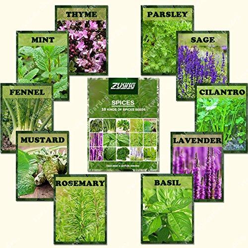 ZLKING 1100 Spice Combo Mix Graines de fleurs aux herbes légumes semences 100% OGM non bio Heirloom Bonsai Graines pour le jardinage Planteur