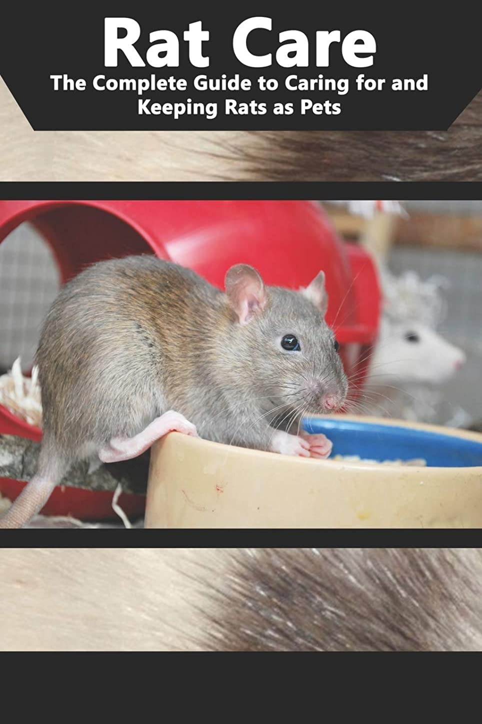 コインランドリー寛大な証人Rat Care: The Complete Guide to Caring for and Keeping Rats as Pets