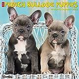 Just French Bulldog Puppies 2022 Wall Calendar, (Dog Breed)