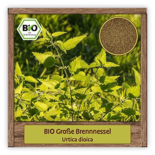 BIO Brennnessel Samen Sorte Große (Urtica dioica) Nessel Kräutersamen Brennnessel Saatgut