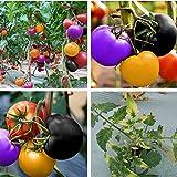 C-LARSS Semillas de tomate raras