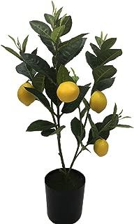 Best miniature lemon tree for sale Reviews