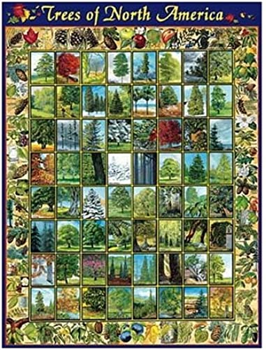 Puzzle 1000 Teile - Trees of North America