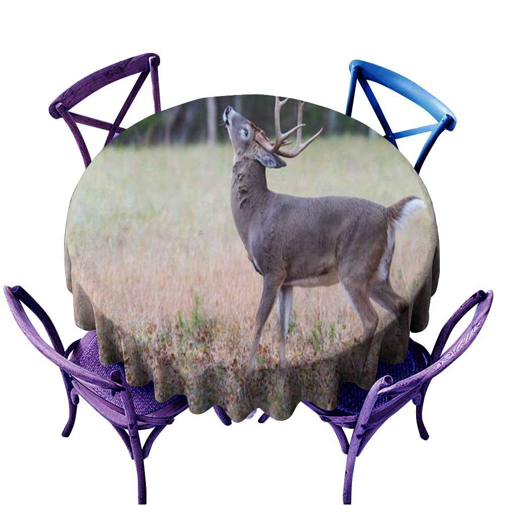 White Tailed Deer Coloring Free Coloring Pages