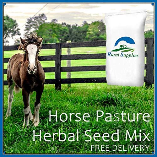 Horse Pasture Herbal Seed Mix - Paddock GRAZING Special Mix Vitamin Boost 1kg (1KG)