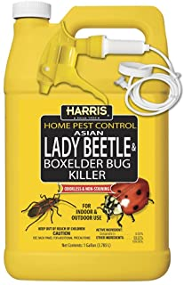 HARRIS Asian Lady Beetle, Japanese Beetle, and Box Elder Killer, Liquid Spray with Odorless and Non-Staining Extended Residual Kill Formula (Gallon)