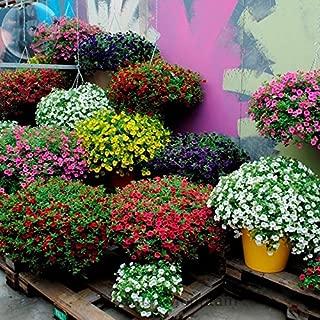 YoYoBoo 2016 New Kabloom-Calibrachoa-Mixed-Bonsai-Hanging-Petunia-professional-pack-200-Seeds-white-red-pink-yellow-purple-mixed