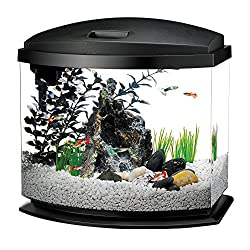 Best 10 Gallon Fish Tanks