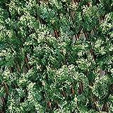 Tenax - Seto artificial con hojas extensibles de sauce, Divy 3D X-Tens Cyprus, 1 x 2 m, verde/blanco