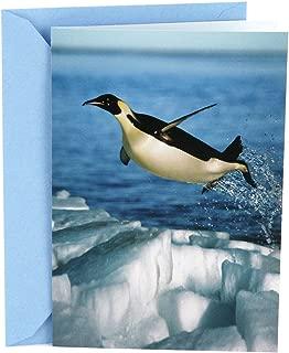 Hallmark Shoebox Funny Congratulations Card or Graduation Card (Penguin)