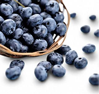Jewel Blueberry 300+ Seeds + 1 Free Plant Markers