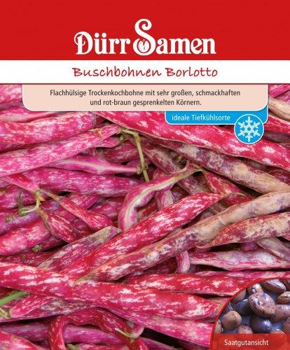 Bohnen - BuschBohnen - Borlotto von Dürr-Samen