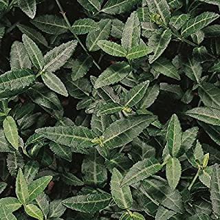 (54 Plants 2.5