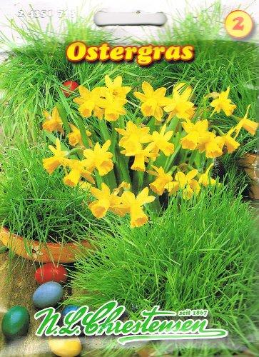 Chrestensen Ostergras für ca. 25 Schalen Samen Gras Saatmischung