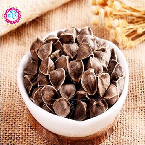 10pcs / bag de Moringa oleifera semillas de moringa semillas comestibles de semillas en macetas bonsai semillas del árbol moringa planta de bricolaje para el jardín de