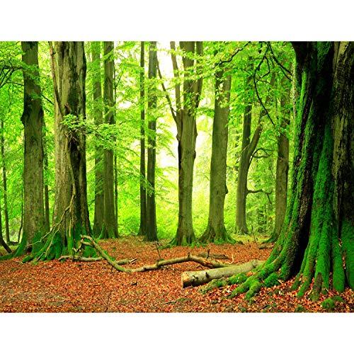 Runa Art Fototapete Wald Modern Vlies Wohnzimmer Schlafzimmer Flur - made in Germany - Grün Braun 9037010a