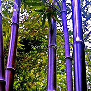 Best purple bamboo plant Reviews