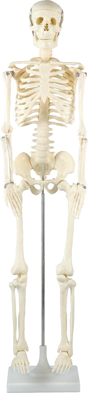 Artec Human Body Model 85 cm 008850