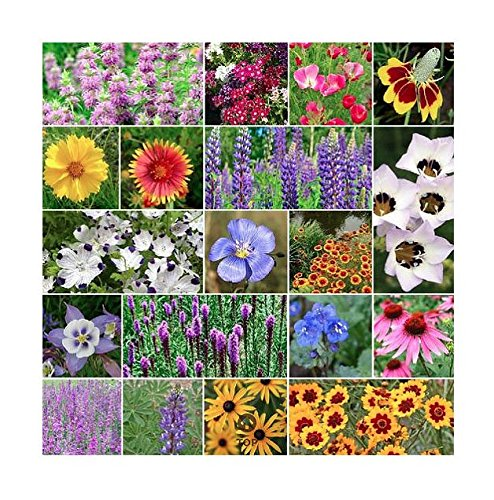US Native Wildflower Seed Mix - Annuals and Perennials, Sun and Partial Shade